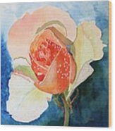 Blushing Bloom Wood Print