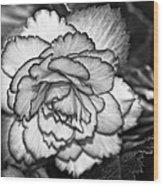 Blushing Bw Wood Print