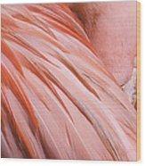 Blushing Flamingo Wood Print