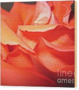 Blushing Orange Rose 6 Wood Print