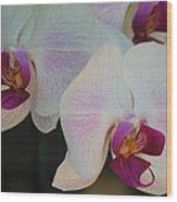 Blushing Orchids Wood Print