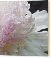 Blushing Peony  Wood Print