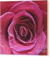 Blushing Pink Rose 3 Wood Print