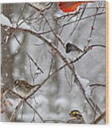 Blushing Red Cardinal In The Snow Wood Print