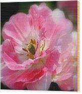 Blushing Spring Tulip Wood Print