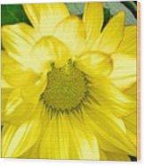 Blushing Sunshine Wood Print
