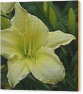 Blushing Yellow - Lilies Wood Print