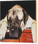 Mastiff Art By Sharon Cummings Wood Print