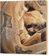 Boa Constrictor Wood Print