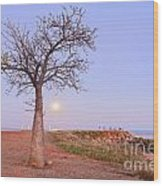 Boab Tree And Moonrise At Broome Western Australia Wood Print by Colin and Linda McKie