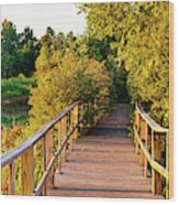 Boardwalk In A Forest, Magee Marsh Wood Print