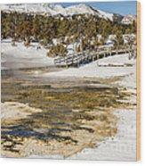 Boardwalk In The Park Wood Print