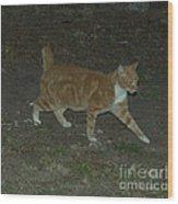 Bob-tail Cat Wood Print