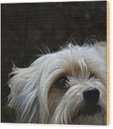 Bob The Dog Wood Print