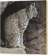 Bobcat Wood Print by Bob Christopher