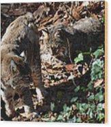 Bobcat Couple Wood Print