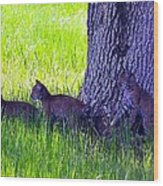 Bobcat Cubs Wood Print