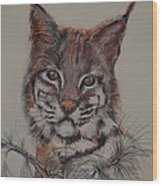 Bobcat Wood Print by Dorothy Campbell Therrien
