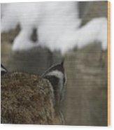 Bobcat Ears Wood Print by Teresa Schomig