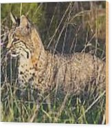 Bobcat In The Grass Wood Print