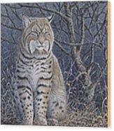 Bobcat Wood Print