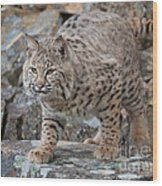 Bobcat On Rock Wood Print