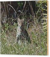 Bobcat On The Prowl Wood Print