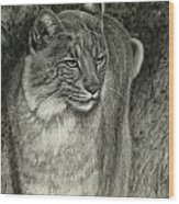 Bobcat Emerging Wood Print