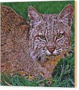 Bobcat Sedona Wilderness Wood Print