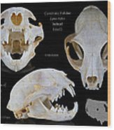 Bobcat Skull Wood Print