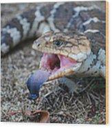Bobtail Lizard Wood Print