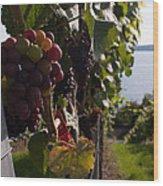 Bodensee Vineyards Wood Print