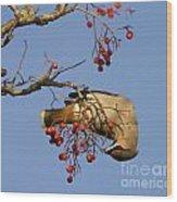 Bohemian Waxwing Eating Rowan Berries Wood Print