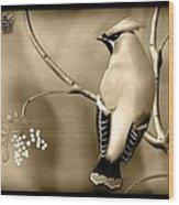 Bohemian Waxwing In Sepia Wood Print