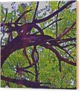 Bois D'arc Wood Print