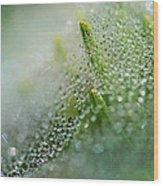 Bokeh And Bubbles 2 Wood Print