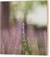 Bokeh With Purple Wildflower Wood Print