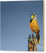Bokmakierie Bird Calling Wood Print