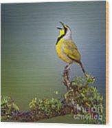 Bokmakierie Bird - Telophorus Zeylonus Wood Print by Johan Swanepoel