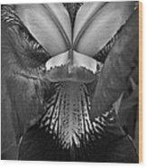 Bold Iris Bw Wood Print