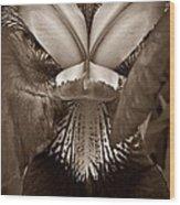Bold Iris Sepia Wood Print