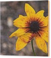 Bold Yellow Flower Wood Print by Jason Brow