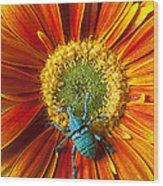 Boll Weevil On Mum Wood Print