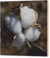 Bolls Of Cotton Wood Print