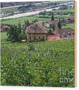 Bolzano Vineyard  Wood Print