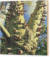 Bombacaceae - Floss Silk Tree - Chorisia Speciosa Hawaii Wood Print