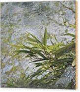 Bombou Comme Une Carte Postale Wood Print