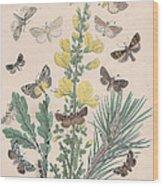 Bombycoidae - Acronyctidae - Orthosidae Wood Print