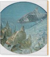 Bonefish Pursued By A Shark, 1972 Wood Print