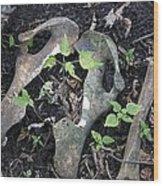Bones On The Forest Floor Wood Print